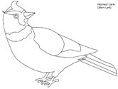 Horned Lark coloring book page