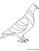 rock dove coloring page