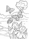 flowers and butterflies coloring page