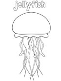 labelled jellyfish coloring page