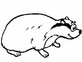 mammals of Norway: badger coloring page