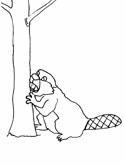 beaver chewing a tree coloring page