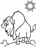 mammals of Poland: Wisent coloring pages
