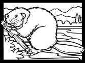 Mammals of Hungary: beaver coloring page