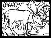 Inuit animals: caribou coloring page