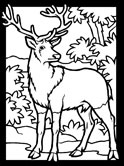 Mammals of Hungary: red deer coloring page