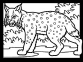 Mammals of Hungary: lynx coloring pages