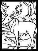 mammals of Norway: elk coloring page