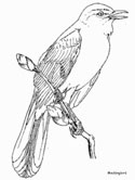 Mockingbird coloring page