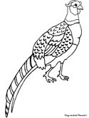 Ring-necked Pheasant coloring page
