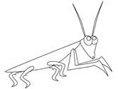 praying mantis coloring pages