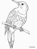 Yellowhammer coloring book page