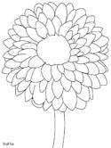 Dahlia, national flower of Mexico coloring page
