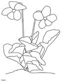 violet flowers coloring page