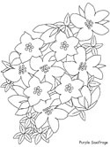 purple saxifrage flower coloring page