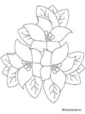 rhododendron coloring page