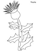 thistle coloring page