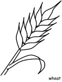 Canadian crops - wheat coloring page