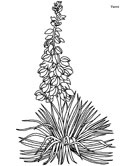 yucca flowers coloring page