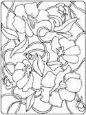 Poland's Nation flower - corn poppy coloring page